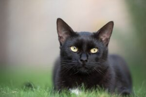 chat-prise-de-vue